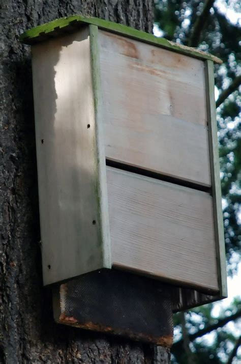 bat house build  bat house bat house plans