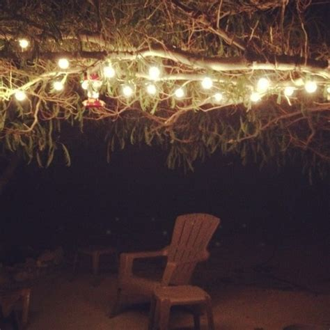 hanging tree lights lights pinterest