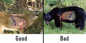 Where To Shoot A Black Bear With A Bow