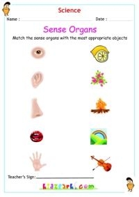 human body parts worksheets  children kidzparkcom