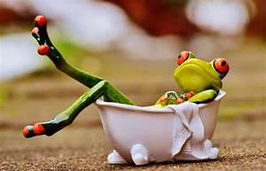 red eyed tree frog ceramic figurine inside bathtub free ...