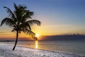 Bilder Von Palmen : vliestapete palme am strand sonnenuntergang ber dem meer ~ Frokenaadalensverden.com Haus und Dekorationen