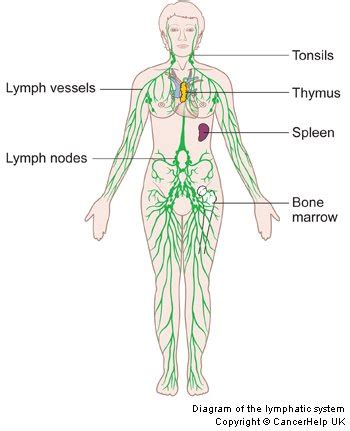 lymphatic system   health benefits  lymphatic