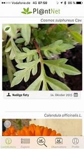Pflanzen Bestimmen Per App PTAheute