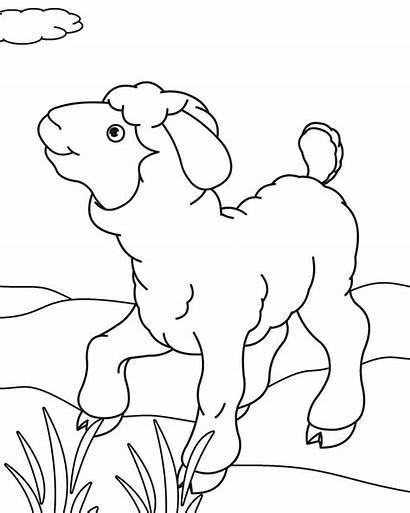 Gambar Coloring Sheep Mewarnai Domba Kartun Untuk
