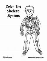 Coloring Skeleton Skeletal System Elementary Pdf Exploringnature sketch template