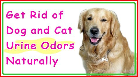 Get Rid Of Dog And Cat Urine Odors Naturally How To Get Rid Of Dog Hair In Car Carpet Mold On Cleaning Chesapeake Ohio Johnson Princeton Il Services Nj Carpets Consumer Reports Complete Care Louisville Ky Sunshine Palmdale Ca
