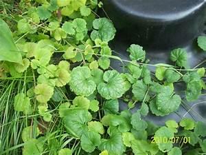Hilfe Im Garten : pflanzenbestimmung erbitte hilfe ~ Lizthompson.info Haus und Dekorationen
