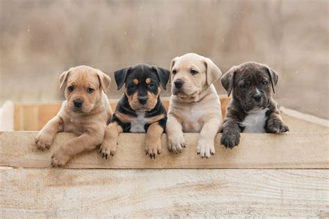 law change means buying  puppy legally  lot