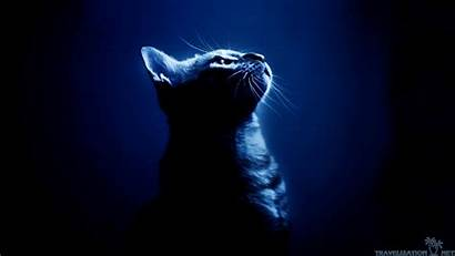 Cat Neon Cool Wallpapers Wallpaperaccess Backgrounds