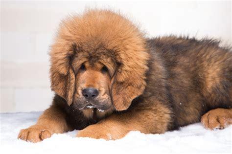 le canapé le plus cher du monde le chien le plus cher du monde