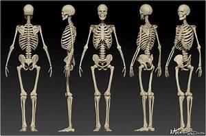 Human Skeleton Study by Meletis on DeviantArt
