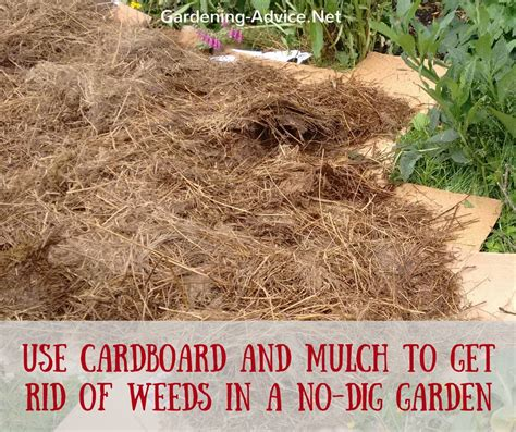 how to get rid of weeds in vegetable garden how to get rid of weeds in vegetable garden how to get rid