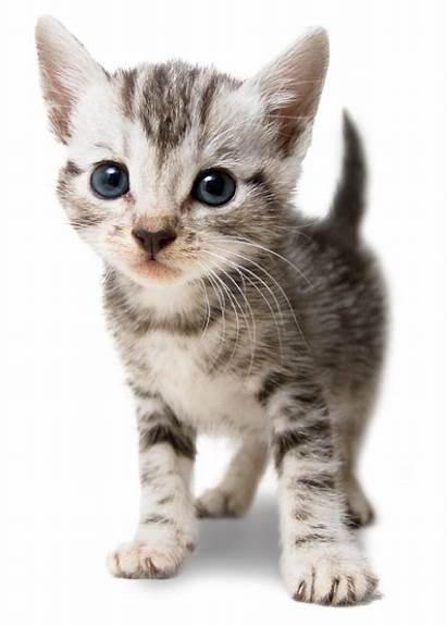 Rspca Animal Animals Care Yesterday Today Statistics