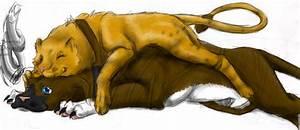 Pitbull Dog Vs Lion