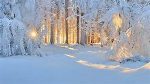 Sunrise, Winter, Nature, Forest, Snow, Landscape, Trees, Sun, Rays, White, Cold, Sunlight, Frost