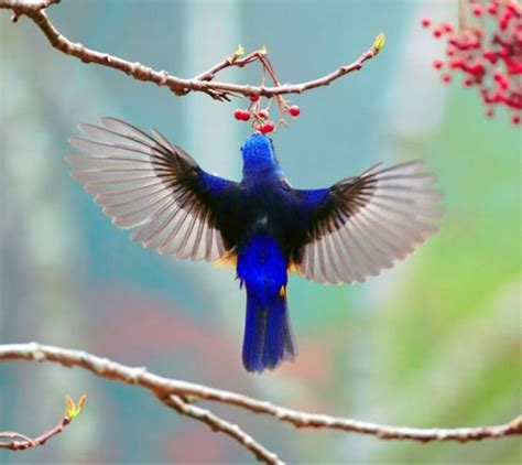colorful birds amazing pictures