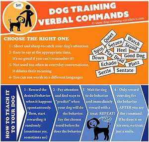 dog training verbal commands guide and instructions With dog training commands