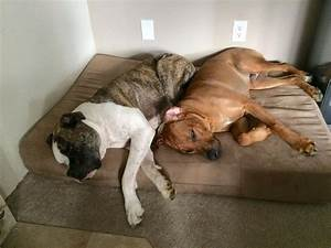 1000 images about dogs on big barker beds on pinterest With big barker dog beds on sale