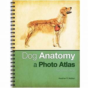 Dog Anatomy  A Photo Atlas