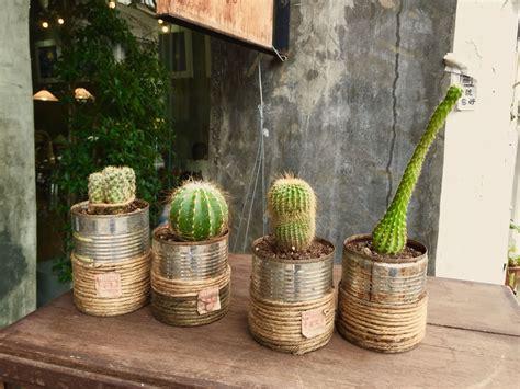 Thai cactus 11   Cactus and succulents, Cactus, Succulents