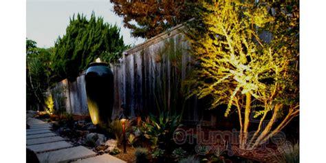 quel 233 clairage ext 233 rieur pour embellir plantes arbustes et arbres