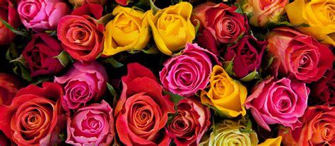 mercato dei fiori sanremo controllo temperature per il mercato dei fiori di sanremo