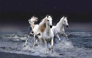 White Horse wallpaper - 416979