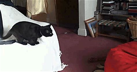 gifs the most epic collection you ve seen