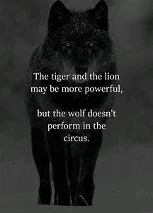 What are some q... Wolf Vs Tiger Quotes