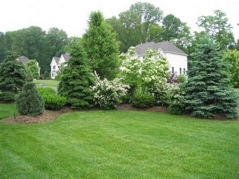 landscaping for privacy privacy landscaping with maturing evergreens and ornamental trees and flowering shrubs outside