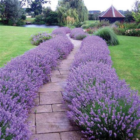 growing perennials 25 best ideas about full sun perennials on pinterest full sun flowers full sun plants and