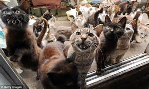 cat hoarder auckland cat hoarder who stored 38 dead pets in his