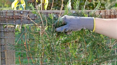 obstbäume vor schützen der nutzgarten im oktober tipps und tricks vom g 228 rtner diybook de