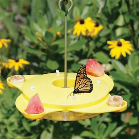 duncraftcom butterfly feeder