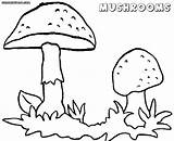 Mushroom Coloring Pages Toadstool Magic Mushrooms Template Printable Getcolorings Pa Getdrawings Awesome sketch template