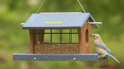 stupendous blue bird feeder 116 bluebird feeders wild