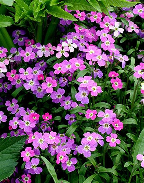 annual flowering bushes top 28 annual flowering bushes cbc garden drought tolerant annuals for shade or sun how to