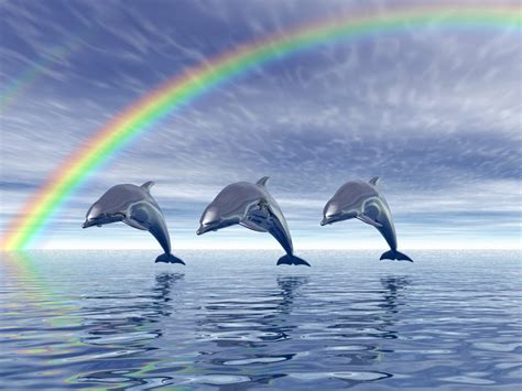 Dolphin Backgrounds For Computer Dolphins Wallpaper 14694 1280x960 Px Hdwallsource Com