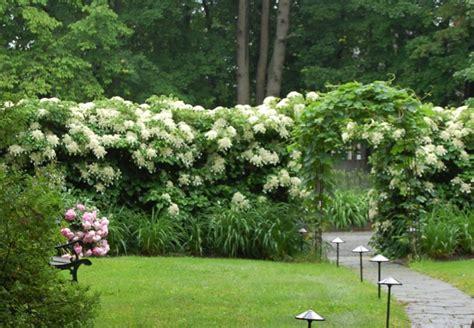 Kletterpflanzen Für Den Garten by Garten Gestalten Bilder 39 Gartengestaltungsideen Die