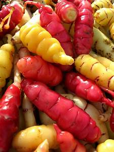 Oca Tuber Mix Available at One Green World Nursery