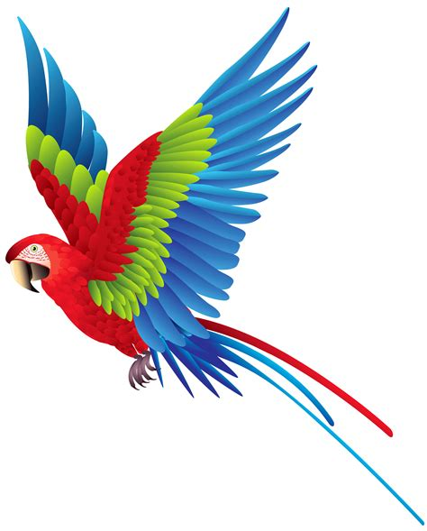 Parrot Clip Wings Clipart Colourful Bird Pencil And In Color Wings