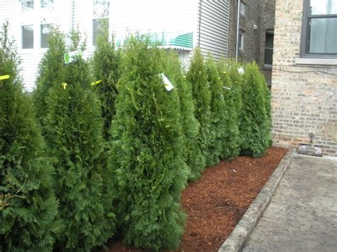 privacy landscaping ideas top 28 landscaping privacy ideas landscaping along fences warren nj softening 25 best