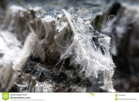raw asbestos fibers royalty  stock photo image