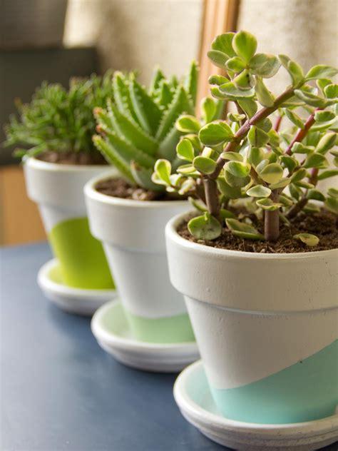 growing succulents indoors diy