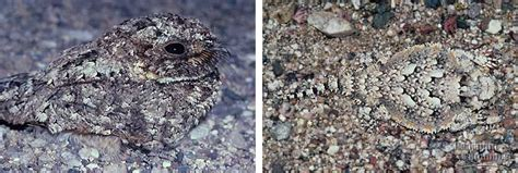 what is cryptic coloration community ecology