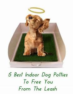 17 best images about basset hound on pinterest doggie With indoor dog bathroom solutions