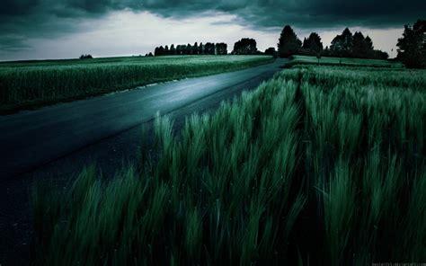 amazing dark green wheat field wallpapers amazing dark