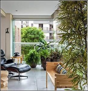 Balkon Pflanzen Sichtschutz : balkon sichtschutz mit pflanzen balkon house und dekor galerie gekgqdd1xo ~ Fotosdekora.club Haus und Dekorationen