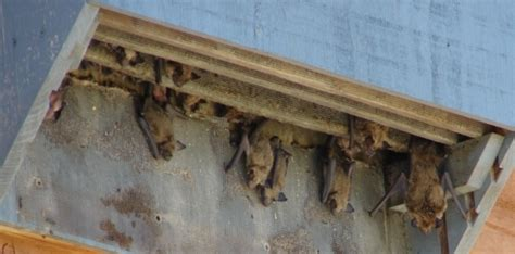 cost of oatmeal medium nursery bat house made by the bird